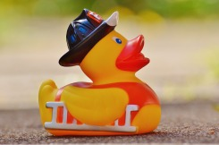 rubber-duck-1361289_1920