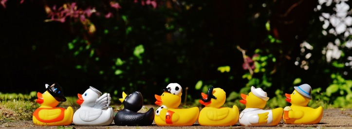 rubber-ducks-1408285_1920